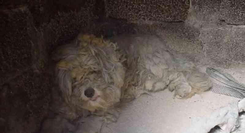 O pequeno cachorro se abrigou em churrasqueira para fugir do incêndio na Grécia - Reprodução / Reuters