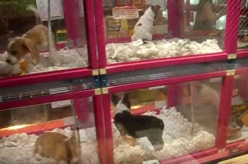 Máquinas do Japão vendem até lagostas e animais de estimação; veja