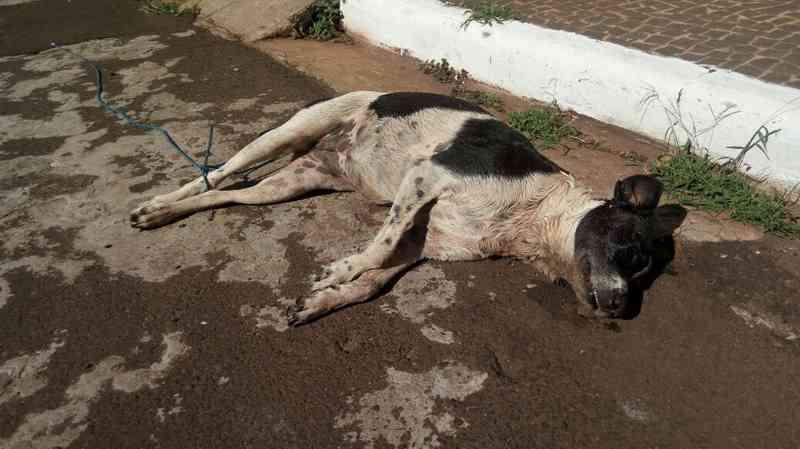 Animal foi encontrado morto com indícios de envenenamento, conforme a polícia ambiental (Foto: Polícia Militar de Meio Ambiente/Divulgação)