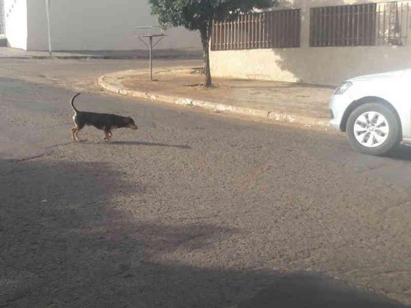Campo Grande (MS) tem 5 denúncias de maus-tratos a cães e gatos todo dia