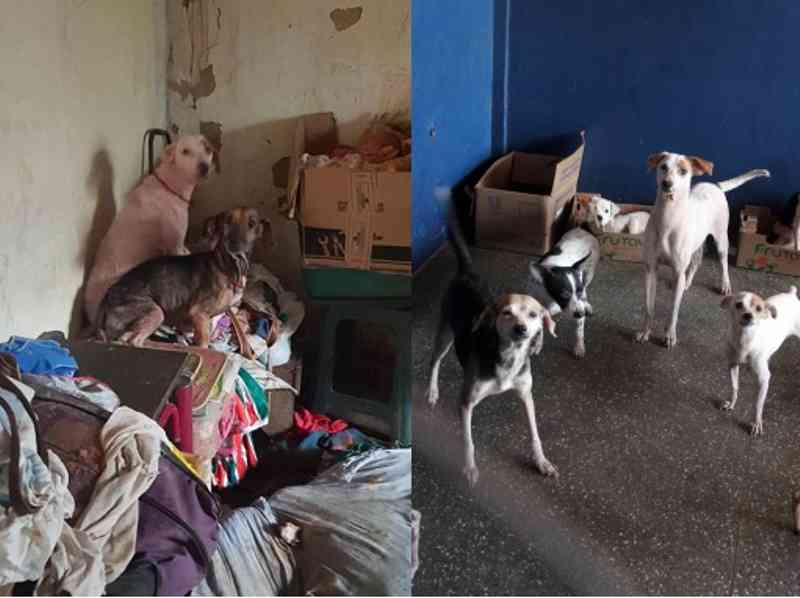 Cães encontrados sujos e abandonados e, após tratamento, já saudáveis e à espera de um lar