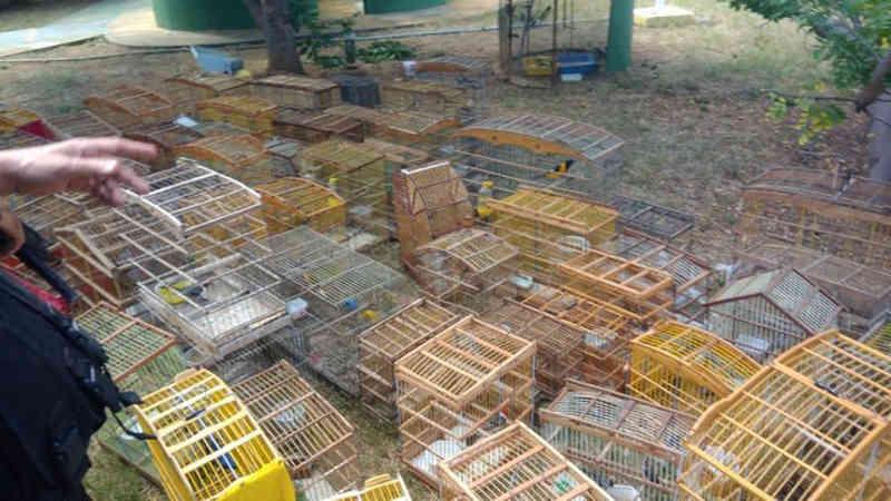 Polícia apreende 250 aves silvestres em Afogados da Ingazeira, PE