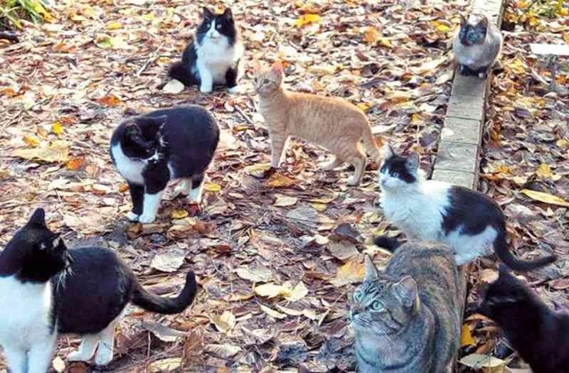 GNR investiga alegado envenenamento de colónia de gatos em São Pedro do Sul, Portugal
