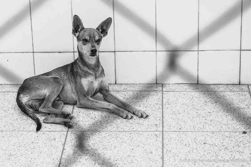 Cães e gatos esperam por adoção em São Vicente, SP