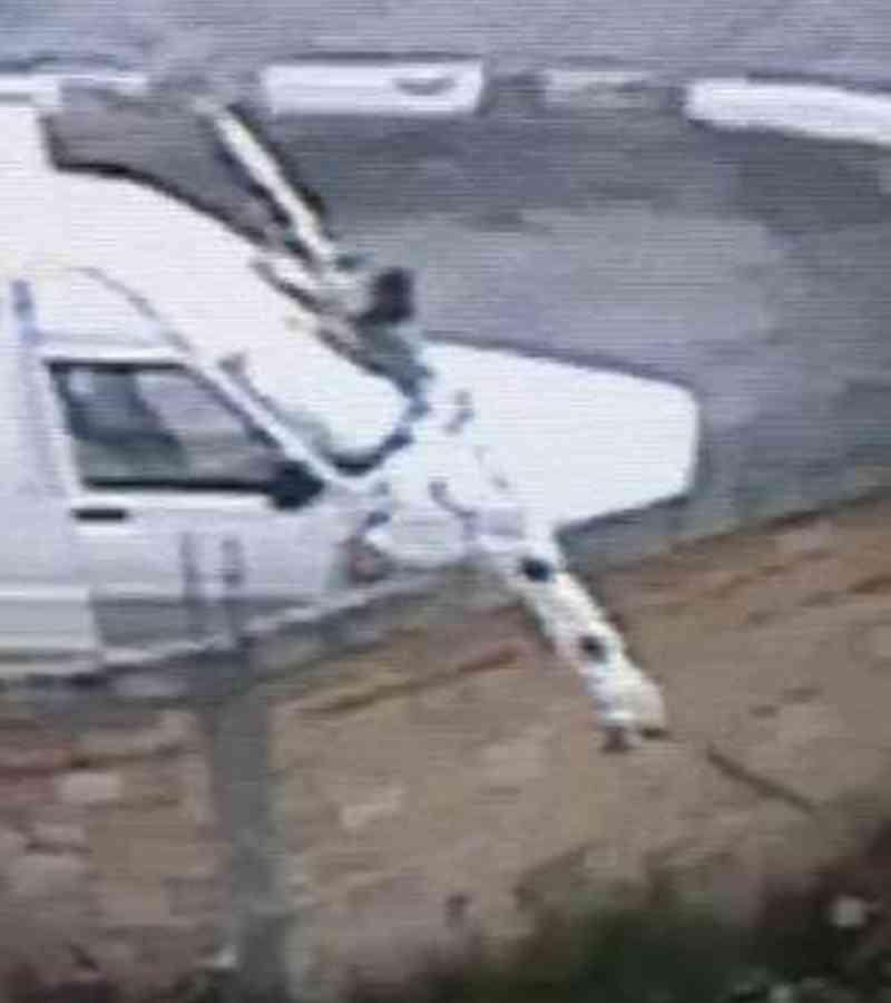 Homem joga cachorro em terreno baldio em Guarulhos, SP
