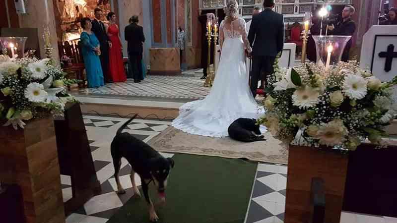 Cachorros invadem casamento de moradora de Laranjal Paulista (Foto: Arquivo Pessoal/Rosemeire Bidinotti)