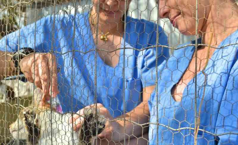Gatil Municipal incentiva adoção dos animais em Pompéia, SP