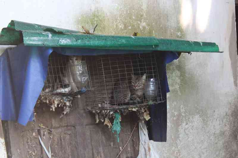 Alguns gatos eram mantidos em gaiolas de passáros (Foto: Rickardo Marques/G1 AM)
