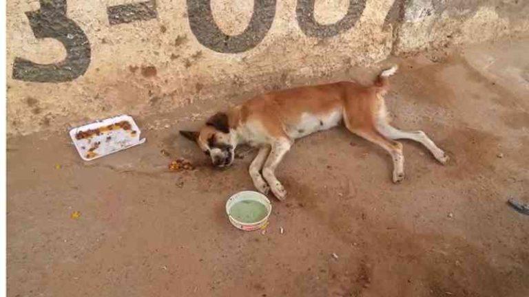ONG resgata cadela vítima de maus-tratos e solicita ajuda para custear tratamento em Juazeiro, BA