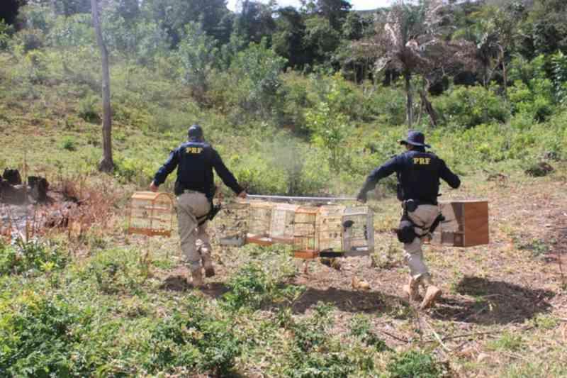 Animais silvestres foram apreendidos durante fiscalização integrada na Bahia (Foto: PRF/ Divulgação)