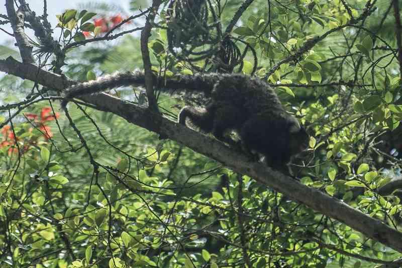 Morte de macacos está relacionada a casos de febre amarela (Agência Brasil/Arquivo/Fábio Massalli)