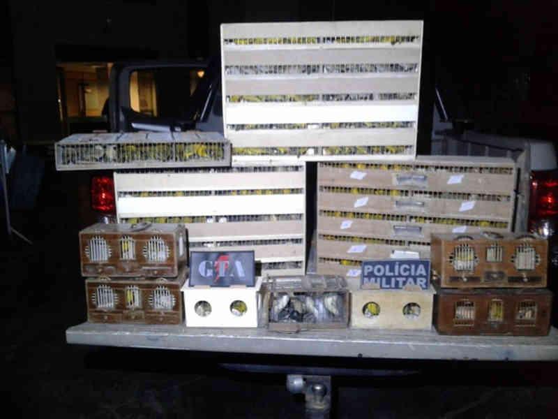 Polícia do DF prende homens com 472 aves vindas de Goiânia, GO