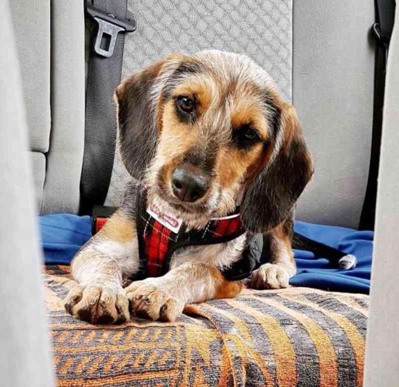 Reprodução/dogsblog.com