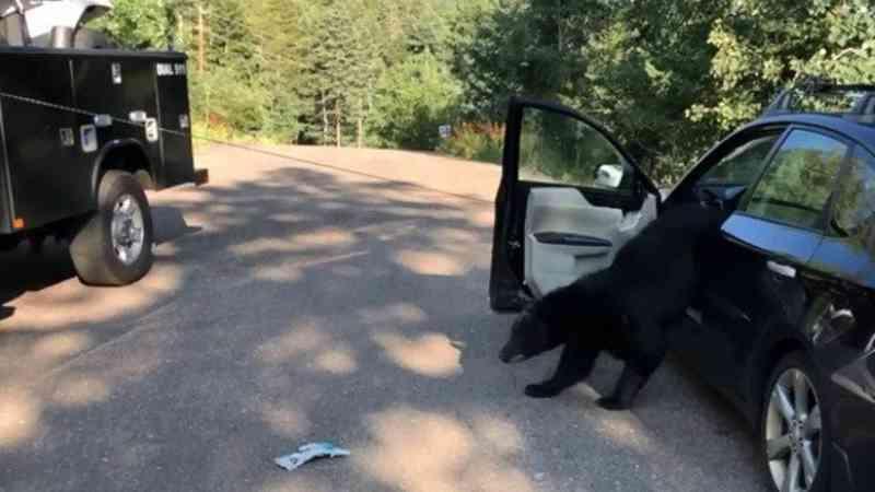 Urso é solto por policiais após ficar preso em carro nos EUA Foto: Reprodução / Facebook