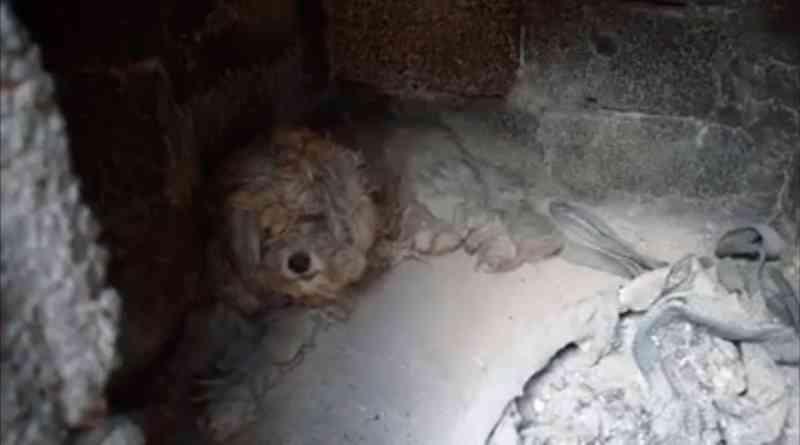 O cão Loukoumakis na hora do restate (Foto: Artemis Kyriakopoulou via AP)