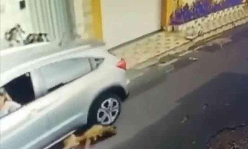 Enfermeira atropela dois cachorros em São Luís; Vídeo repercutiu nas redes sociais (Foto: Reprodução/Instagram)