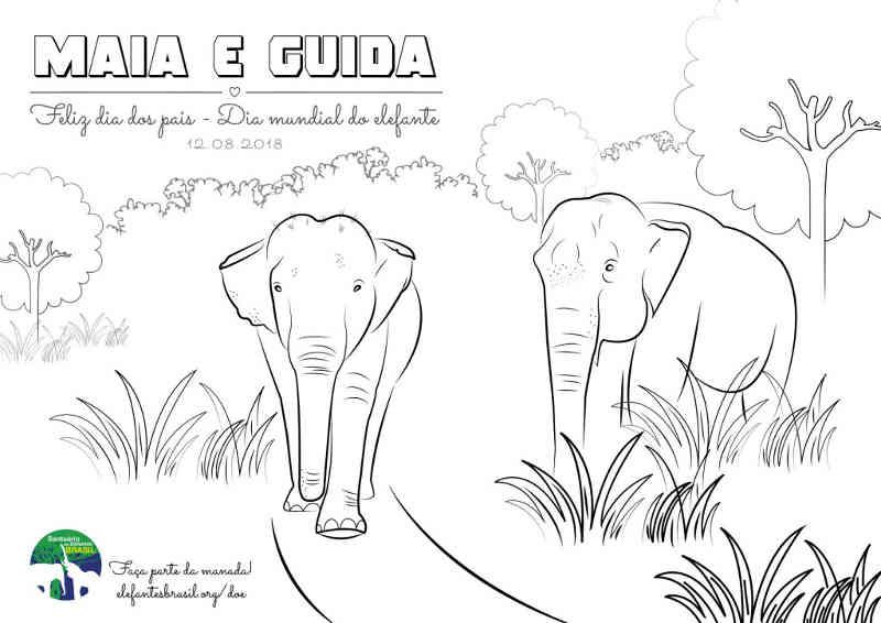 Para colorir, Ilustração de Maia e Guida, 2 primeiras residentes do Santuário; mensagem destaca 12 de agosto como dia dos Pais e dia Mundial do Elefante.