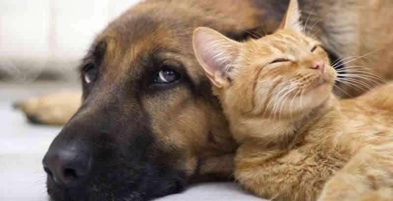 Sancionada Lei de proteção e controle populacional de animais.(Foto: Geração Pet)