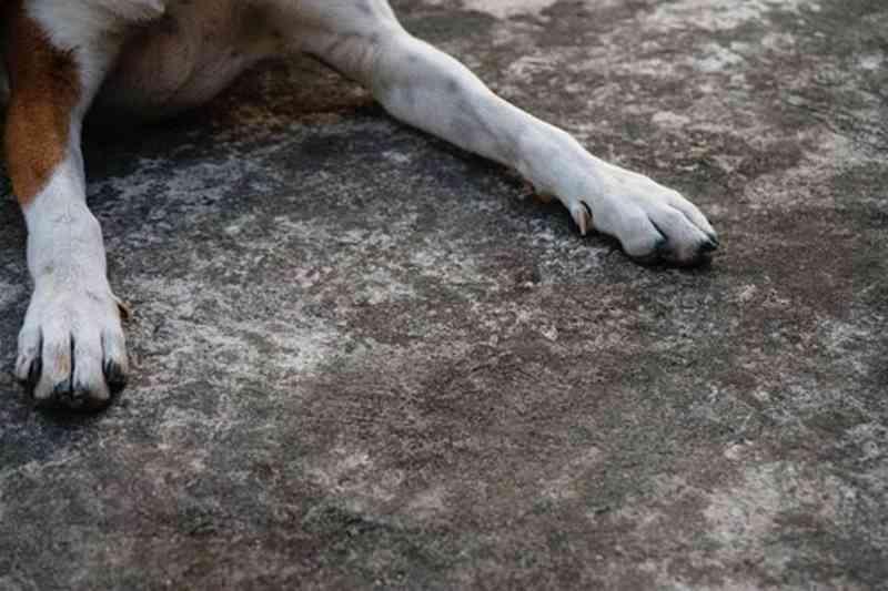 Testemunhas filmaram animal e partilharam na net. Caso ocorreu em Benavente. - Getty Images