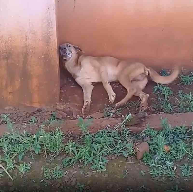 Casos de envenenamento de cães em Rio do Salto (PR) revoltam população