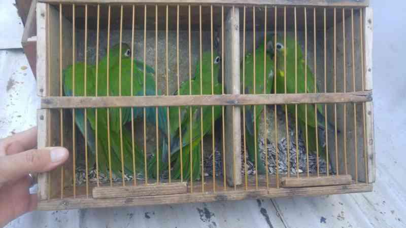 Aves foram resgatadas durante o fim de semana em Natal (Foto: Guarda Municipal de Natal/Divulgação)
