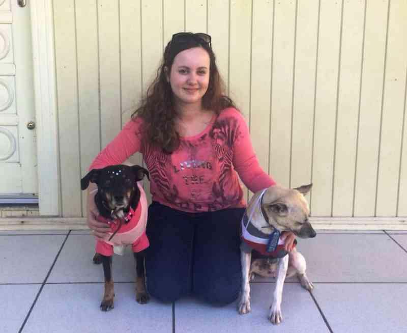ONG SOS Vira-Lata encaminha 11 cães para adoção responsável em Criciúma, SC