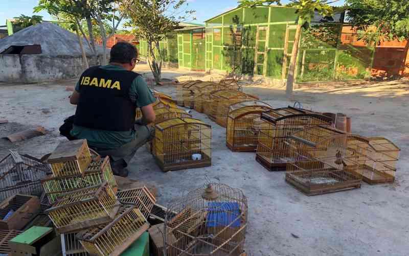 Aves apreendidas durante a operação em Sergipe (Foto: IBAMA/SE)