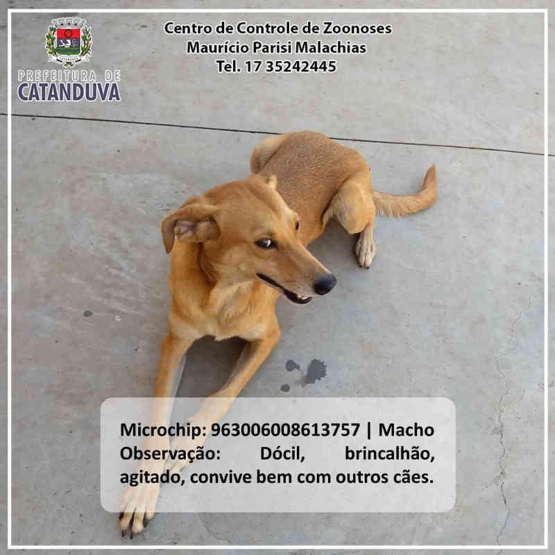 CCZ de Catanduva (SP) lança book animal para incentivar a adoção