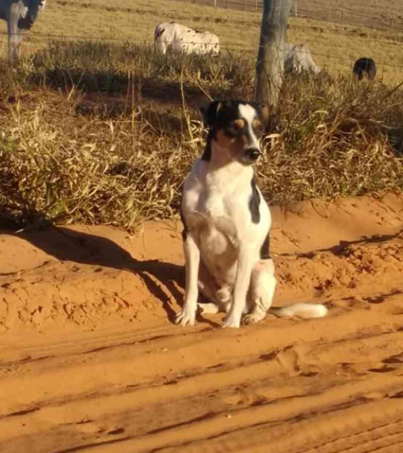Cão aguarda tutor em estrada de terra. Homem morreu há duas semanas depois se ser agredido durante assalto - Lourdes Brito / Arquivo Pessoal