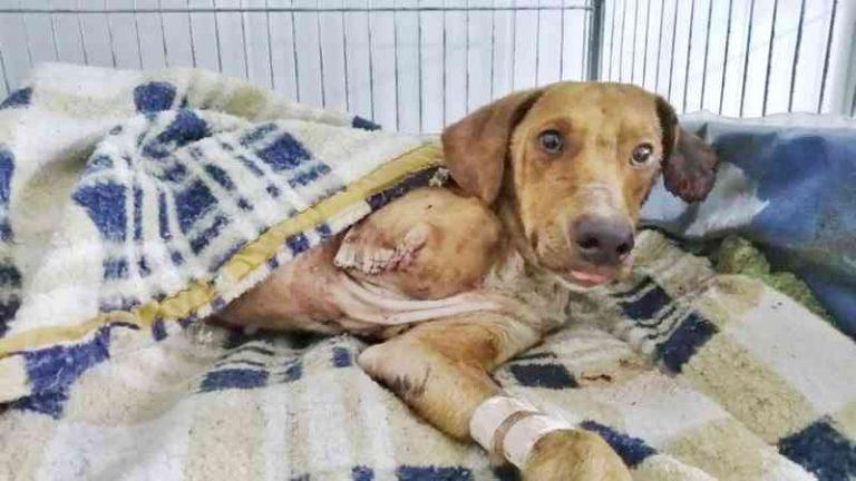 Cão resgatado passou por atendimento e ganhou o nome de Roque (Foto: Paola Giordani/ Arquivo pessoal)