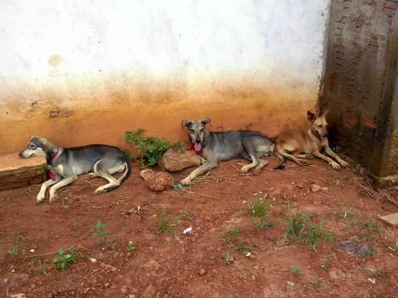 Projeto quer castrar cerca de 100 cães e gatos que vivem nas ruas em Sena Madureira, no interior do Acre