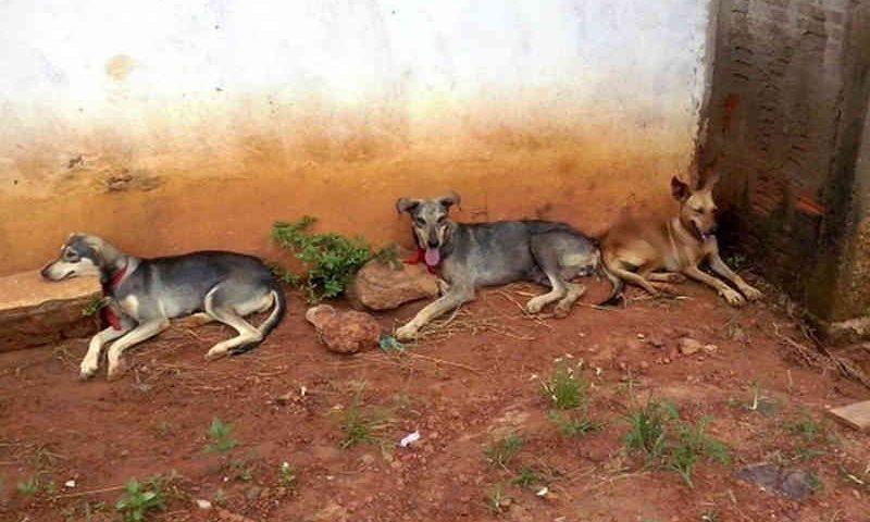 MP cobra explicações sobre animais abandonados e doentes em município no interior do Acre