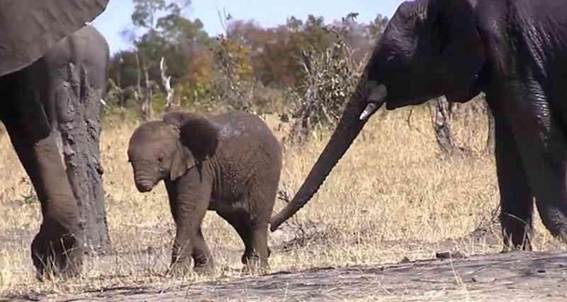 Cria de elefante foi avistada na África do Sul - Getty Images
