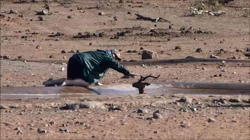 Turista resgata impala preso na lama durante safari na África do Sul