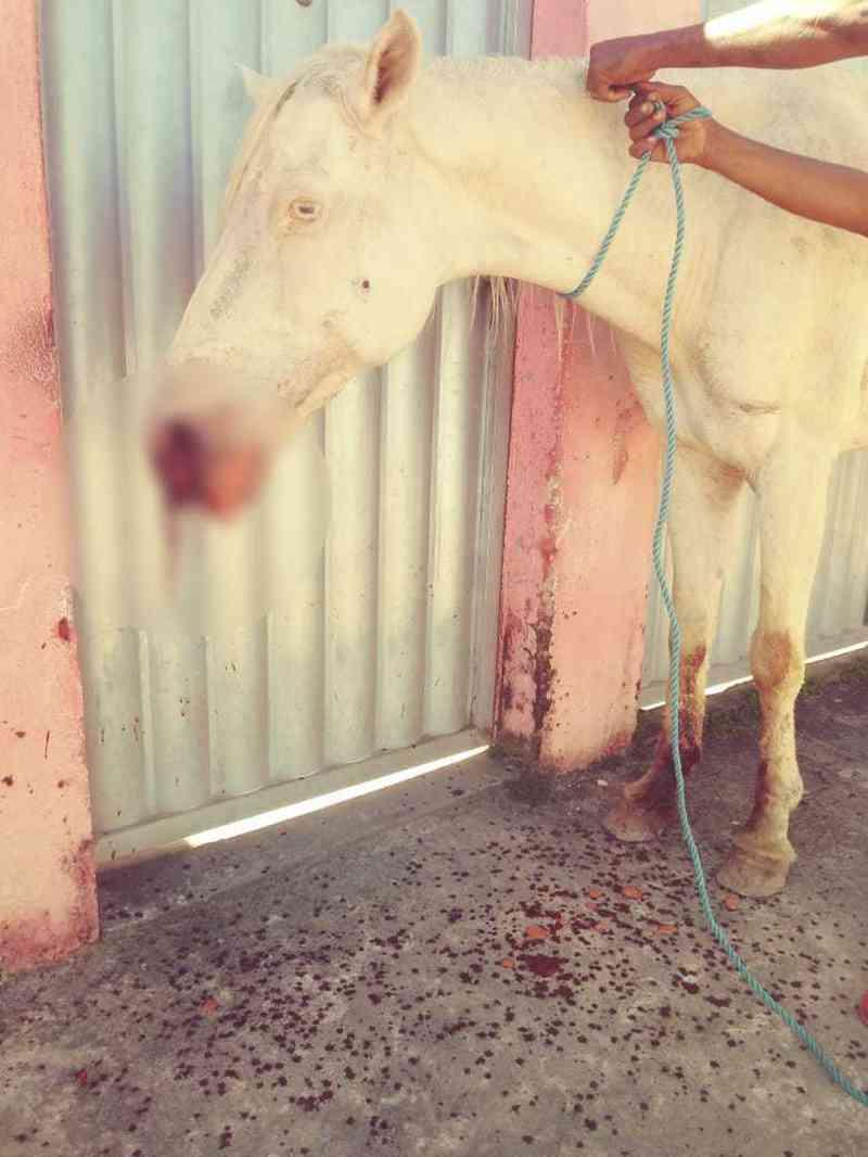 Moradores denunciam que égua foi atingida por dois tiros no Village Campestre — Foto: Divulgação/Pata Voluntária