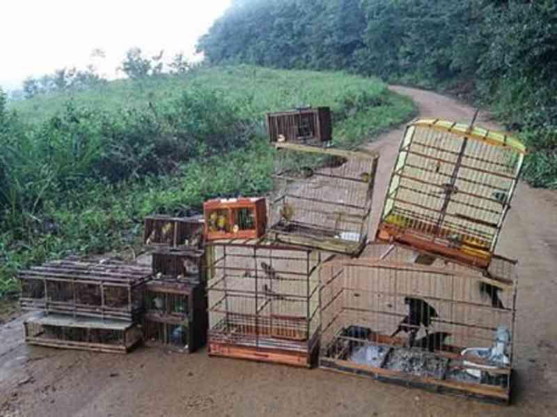Suspeitos de tráfico de aves são presos e multados no interior de AL