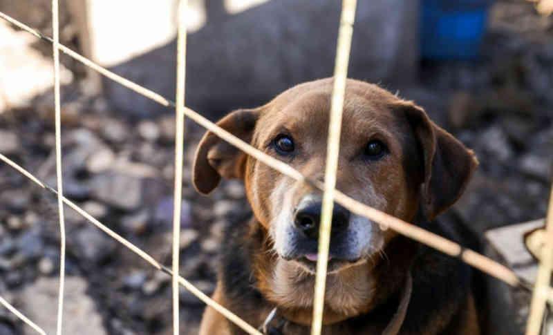 Semana da Consciência Animal alerta sobre as doenças e os maus-tratos em Salvador, BA