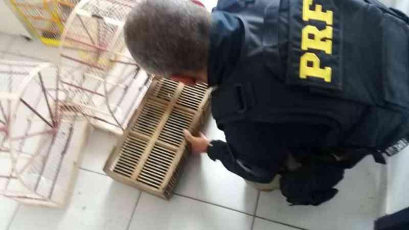 Durante a revista no interior do veículo, agentes da PRF encontraram gaiolas vazias. — Foto: Polícia Rodoviária Federal / Divulgação