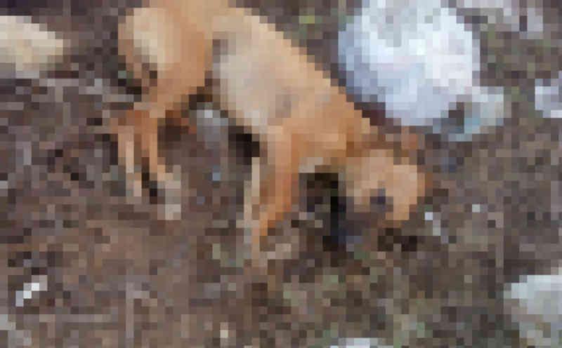 Homem mata cachorro em via pública e revolta moradores em Vitória da Conquista, BA