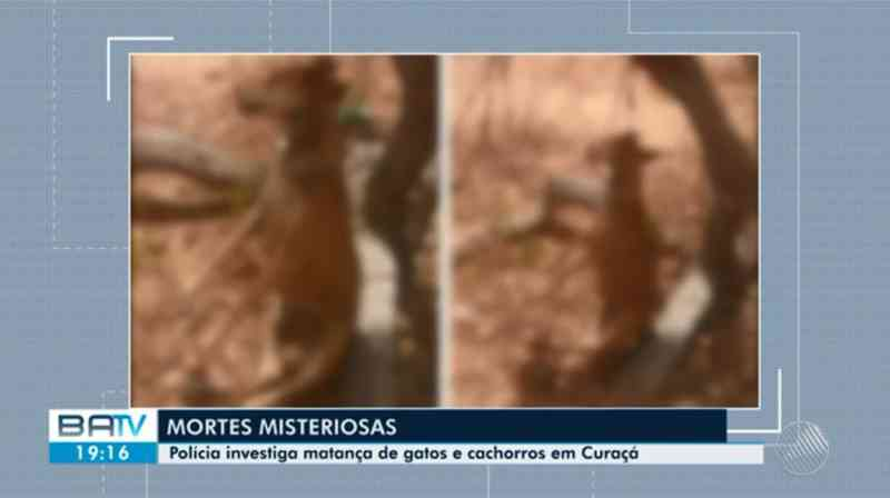 Cachorro foi enforcado em árvore na zona rural do município — Foto: Reprodução/TV São Francisco
