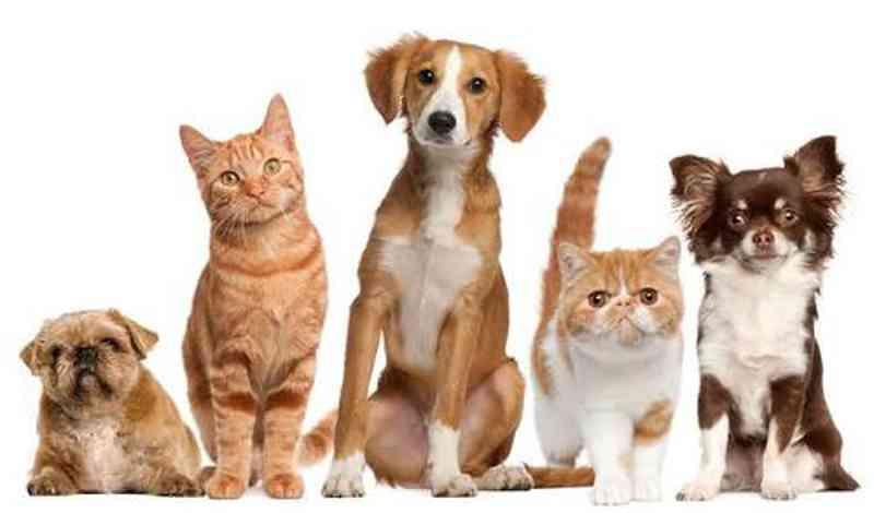 Proteção dos animais.