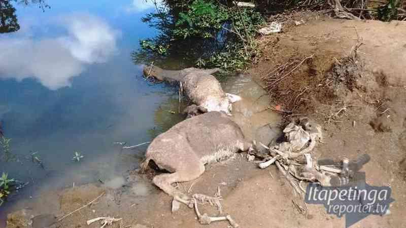 'Circo dos horrores': cemitério de jumentos é encontrado em Itapetinga, BA