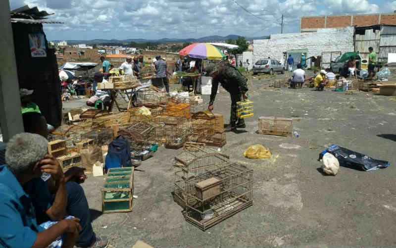 Levantamento da polícia aponta que 1.231 animais silvestres foram apreendidos em 2018 na Bahia