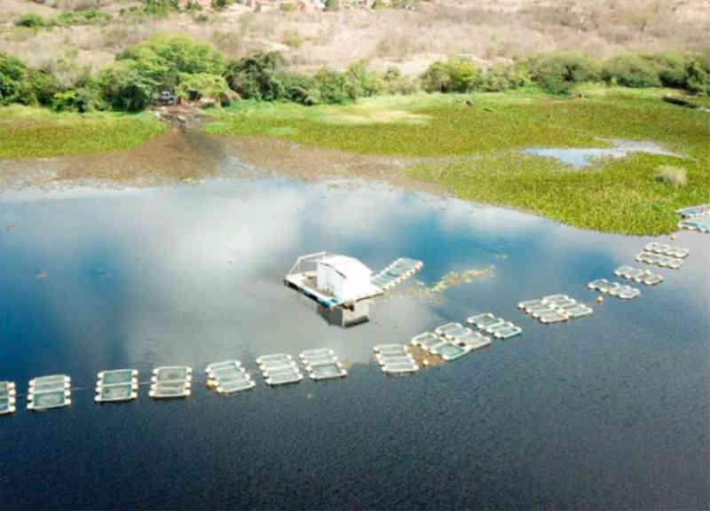 Mais de 600 animais silvestres são apreendidos na Bacia do Rio Paraguaçu, na BA