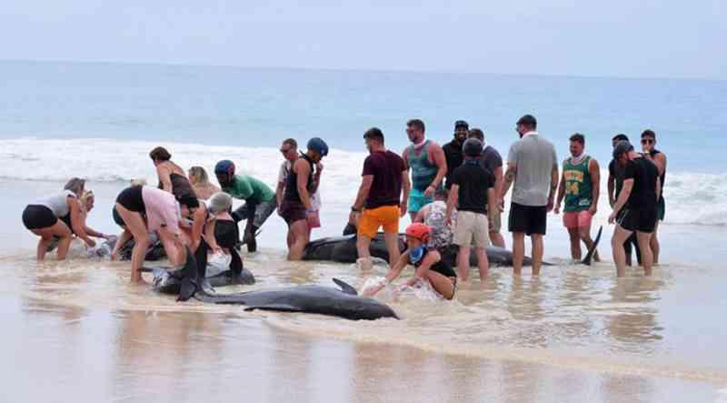 Mais de 30 baleias-piloto deram à costa na praia da Varandinha, em Cabo Verde