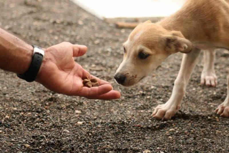 Movimento Comunidades Responsáveis realiza primeira conferência sobre protecção animal em Cabo Verde