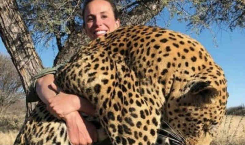 Caçadora de troféus se torna a presa: fúria após a mulher exibir um leopardo abatido