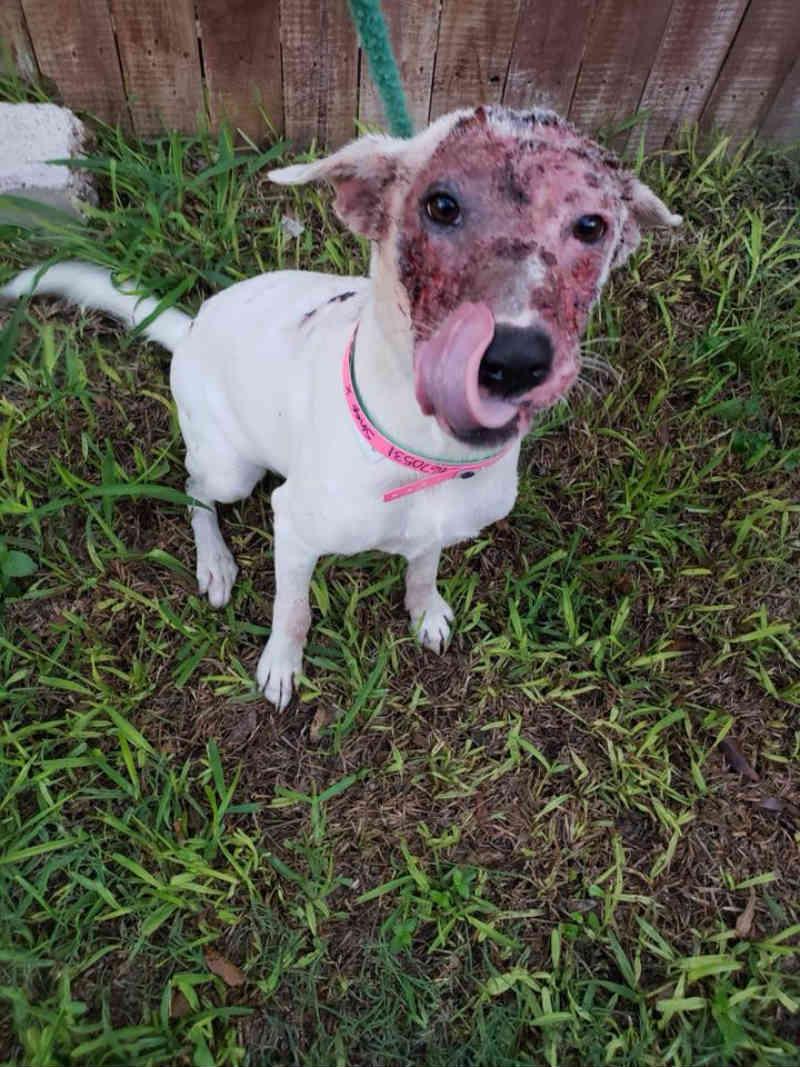 Esta doce cachorra teve queimaduras faciais tão profundas que os resgatistas estão impressionados que ela tenha sobrevivido