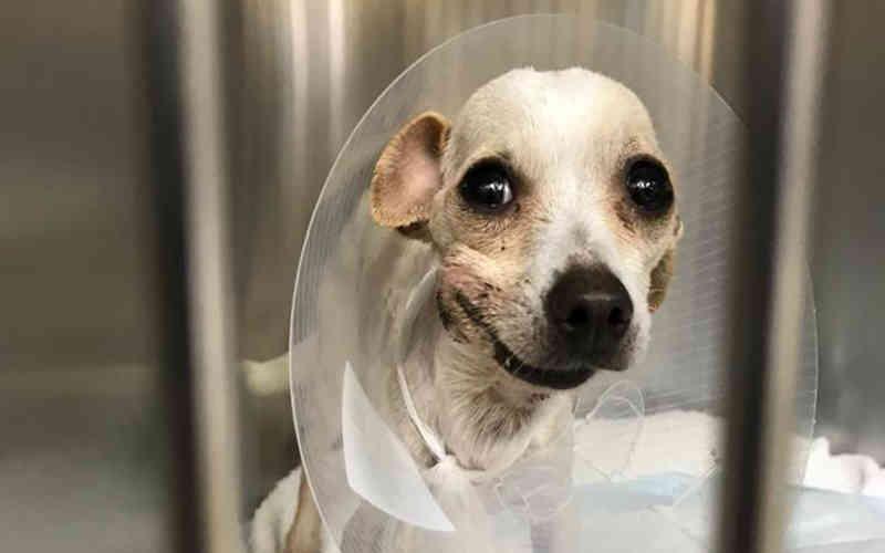 Cachorrinha teve de usar focinheira para segurar mandíbula após negligência terrível