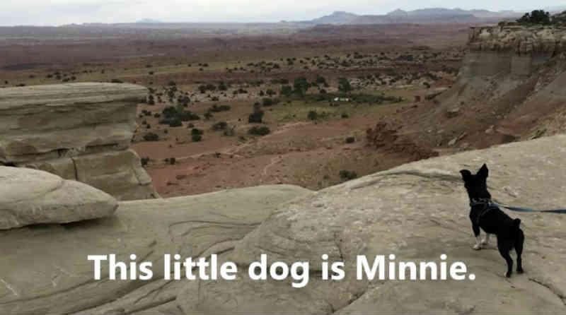 Esta cadela que estava desabrigada e coberta de pulgas na Romênia agora faz caminhadas nas montanhas no Colorado graças a pessoas amáveis!